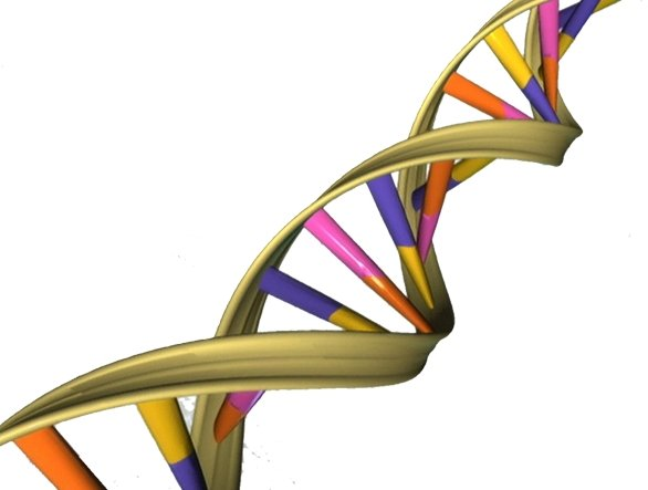 Harvard scientists discover 'genetic recipe' for youthful skin
