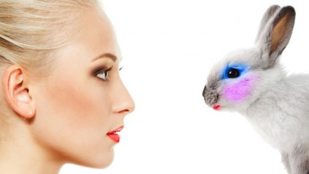 2015 in review: Cruelty-free cosmetics – a worldwide ban is nigh