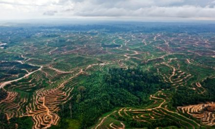 CDP on deforestation: L'Oréal and Beiersdorf lead the way on sustainable sourcing of palm oil