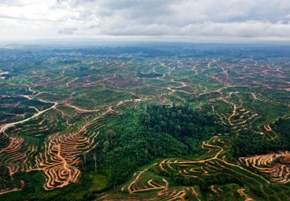 Palm oil pledge: Unilever cancels its contract with IOI Group over deforestation