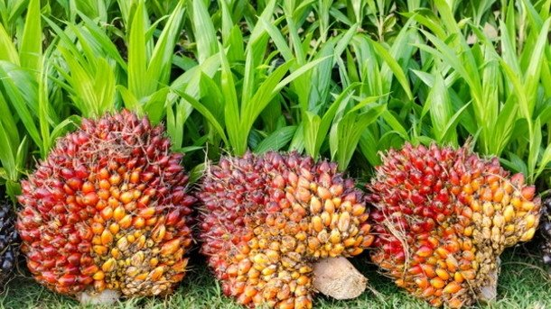 Roundtable on Sustainable Palm Oil calls for harmonious sustainable palm oil industry