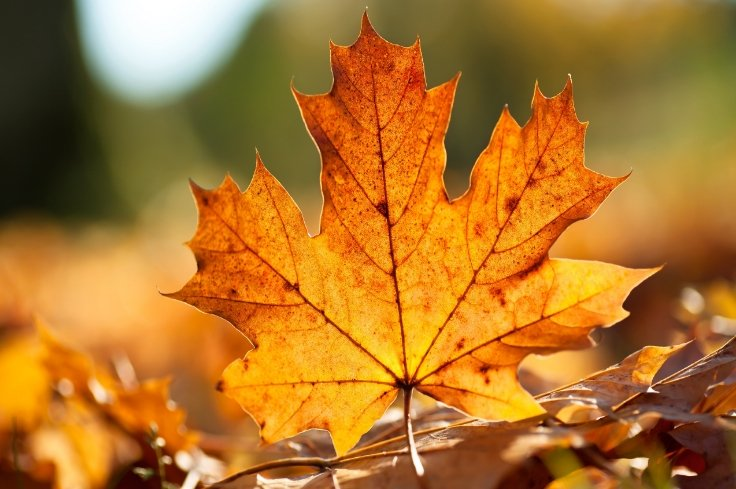 Harvest festival: Finnish scientists to extract natural pigments from autumn leaves