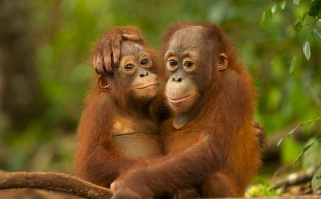 Greenpeace names and shames PZ Cussons and Johnson & Johnson for failing to disclose palm oil sources