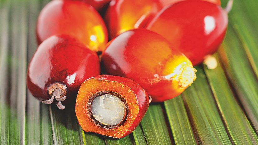 BASF, The Estee Lauder Companies, Solidaridad and RSPO team up for new sustainable palm oil project