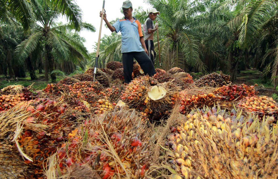 RSPO introduces new green palm oil rules for Unilever, Procter & Gamble et al