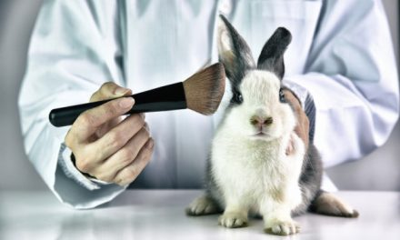 The Chinese animal testing loophole – how cruelty-free brands are getting their foot in the door