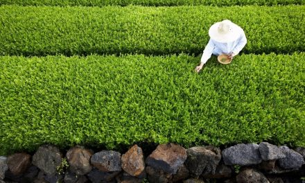 AmorePacific opens Green Tea research center