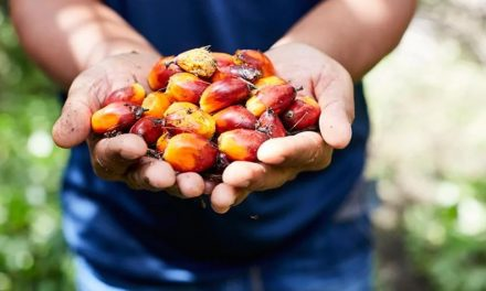 Risk associated with Indonesian palm oil pegged at US$10 billion for firms