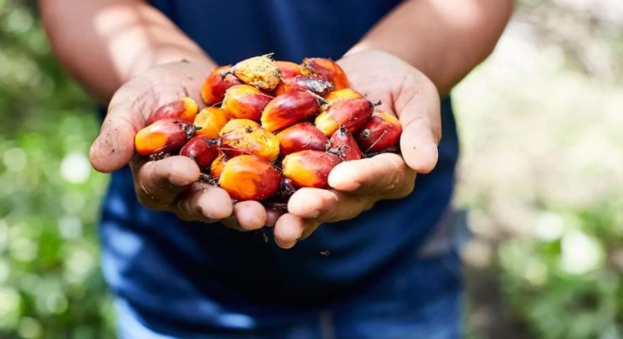 Colombian palm oil production up 10 percent this year